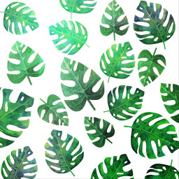 leafbackground freetoedit remixit leaves tropical