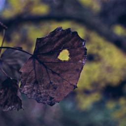 nature leaf outandabout leafmad freetoedit