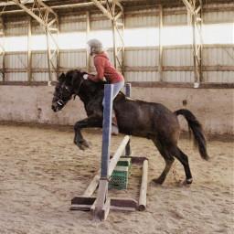pony horse gibson