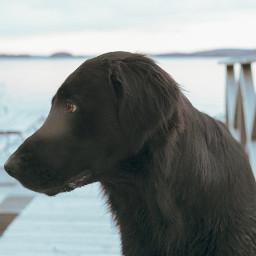 photography flatcoatedretriever pets nature landscape