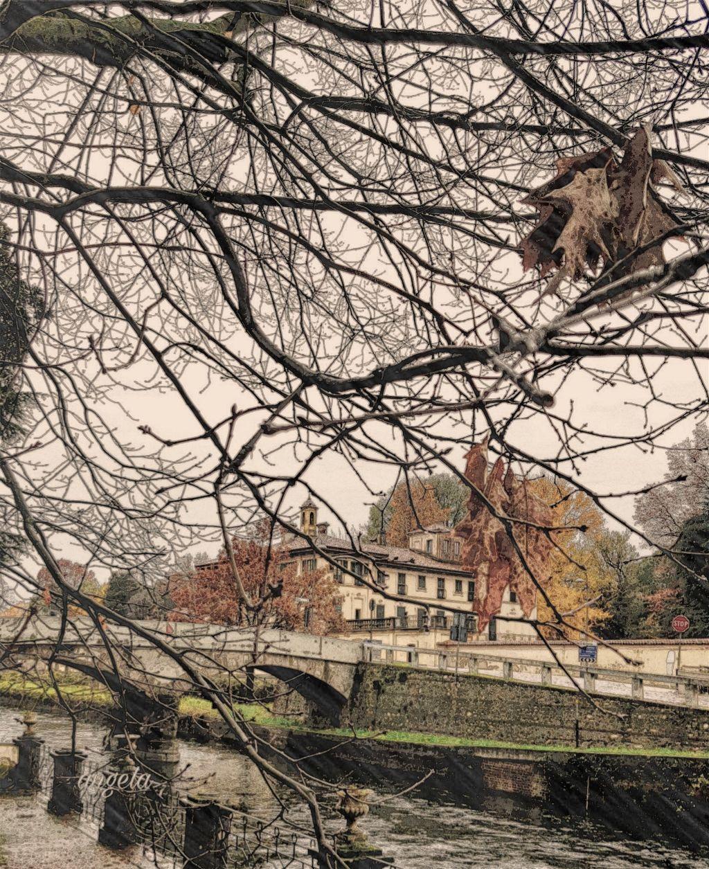 #freetoedit #landscape #tree #river #myphoto #lombardia #italia