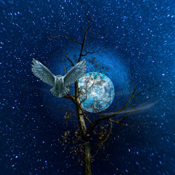 freetoedit bluemoon tree owl galaxy