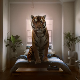 freetoedit cozy begold thankful tiger bedroom nature interesting art animal amazing home homesweethome jungle sleep adventure fierce