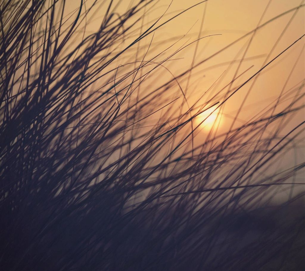 #beachdunes #grass #goldenhour #nature #lowangleshot #sunsetphotography  #freetoedit