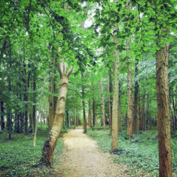 freetoedit nature outdoors happiness thankful