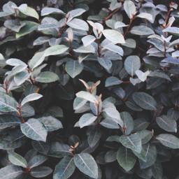 nature bushes shrubs monochromatic naturephotography freetoedit
