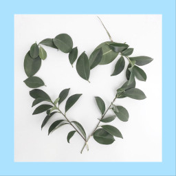 leaflove