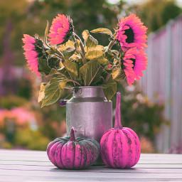 freetoedit pumkins pumkin flowers pink