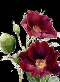 stickers ftestickers flower freetoedit