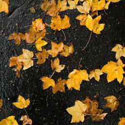 autumn fallenleaves ontheroad rainyweather yellowleaves freetoedit