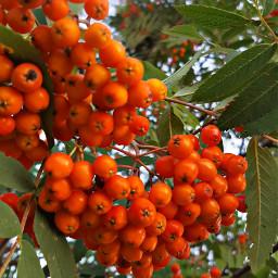 freetoedit bunia0914 myphoto myphotography tree