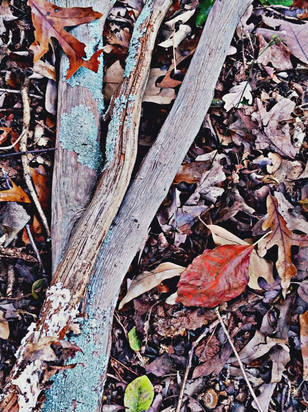 Nature#beauty#November2019