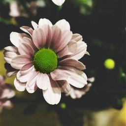 nature flower closeup dramaeffect freetoedit