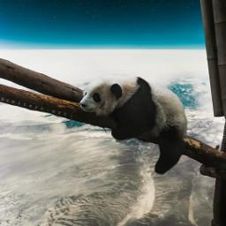 panda space cute fantasy