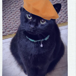 freetoedit challengeoftheday remixit cats blackcat srcfrenchberet frenchberet