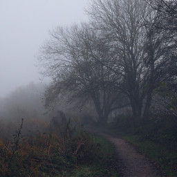 foggyday trees pathway outandabout freetoedit