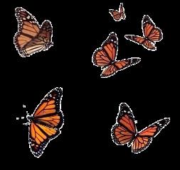 aesthetic aesthetics butterfly butterflies overlay freetoedit