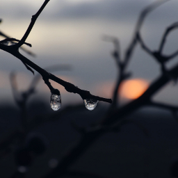 waterdrops frozen hedgerows outandabout freetoedit