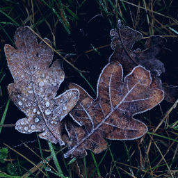 nature leaves frosty frozen outandabout freetoedit