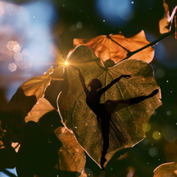 freetoedit autumn bokehbrush silhouette leaves