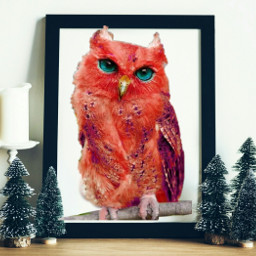 freetoedit frame owl