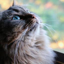 freetoedit myphotography petsandanimals cat eyes