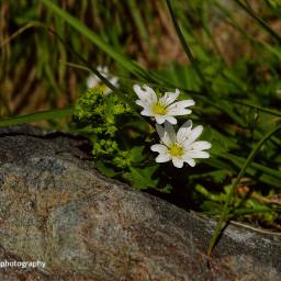 freetoedit followme montain flowers flowersremix