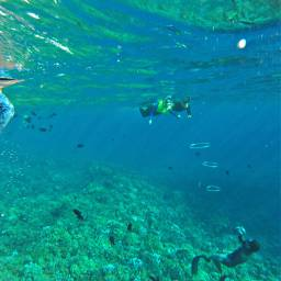 amazing crystalclear snorkeling airrings maui
