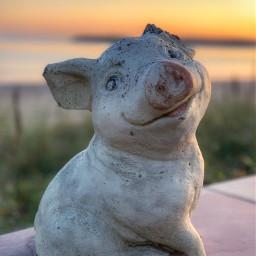 freetoedit remixme pig pigs piglet