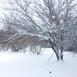 white winter snowday pcwhite
