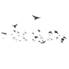 ftestickers birds flock flying freetoedit