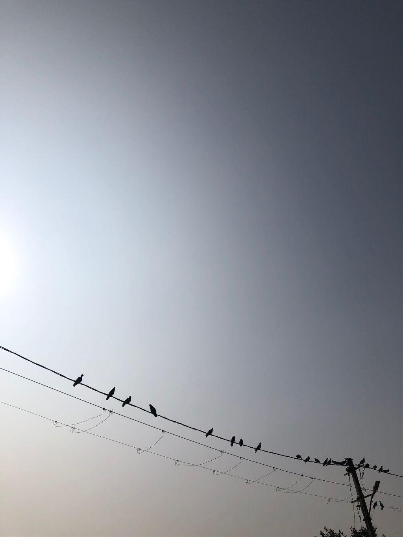 #freetoedit #nature #birds #minimal #remixit #naturelover #picsart #interesting #art #photography