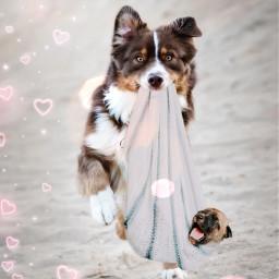 freetoedit dog собака irchappypuppy happypuppy