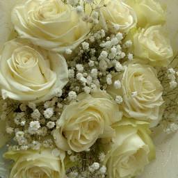 roses white nature flowers pcwhite