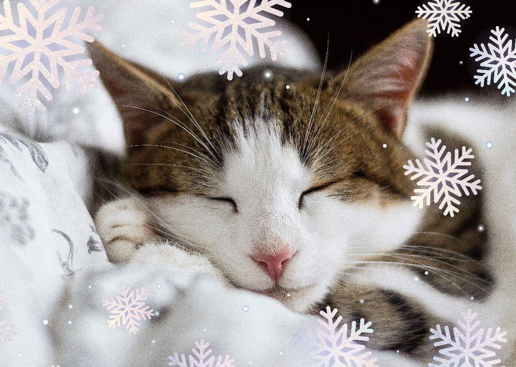 #freetoedit #snowflakebrush