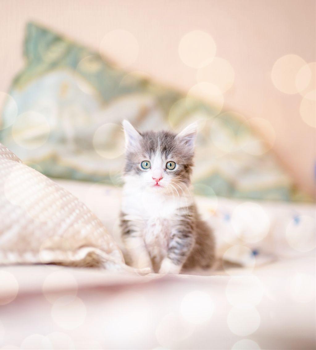 #freetoedit #cat #cats #cute #pet #animal #kitty #remixit
