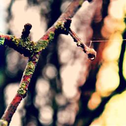 tree backgroundblur nature stunning