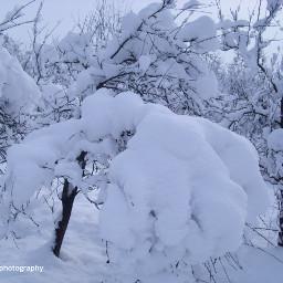 freetoedit followme landascape winter wintertime