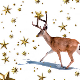 freetoedit holidaystarsbrush
