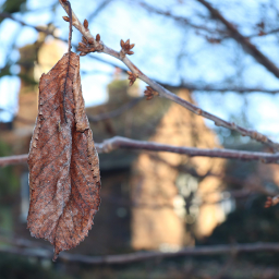 nature leaf loneleaf tree closeup freetoedit