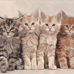 freetoedit replay kittens pastel cute