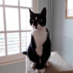 mypet cats catsofpicsart cute petsandanimals freetoedit