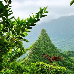 hawaii olomana hike nature jungle freetoedit