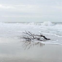 seashore beachscenery wavescrashing treebranches driftwood freetoedit
