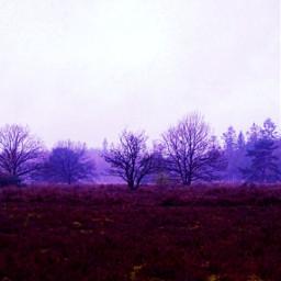 trees winter purple silhouette adjusttools freetoedit