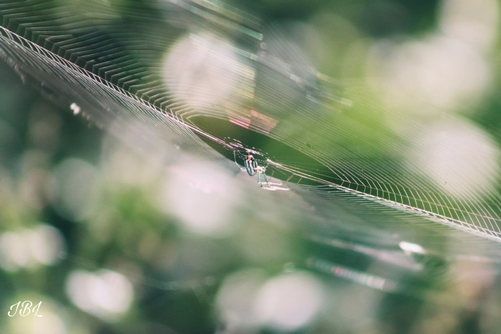 #freetoedit #remix #remixme #colorful #photography #outdoors #nature #spider #bokehbackground #spiderweb #canonphotography