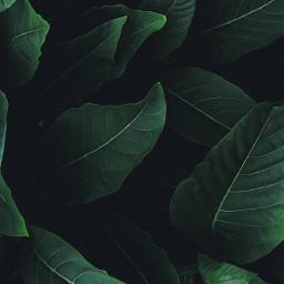 gogreen nature bushes shrubs leaves freetoedit