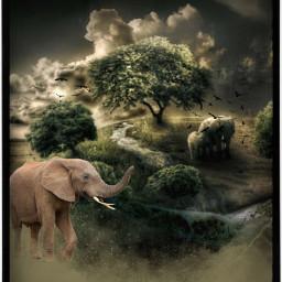 freetoedit elephants darkinafrica endangeredspecies