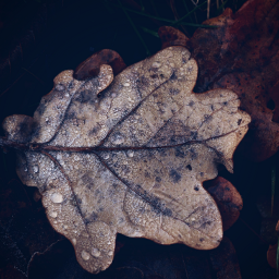 nature leaves waterdrops closeup freetoedit