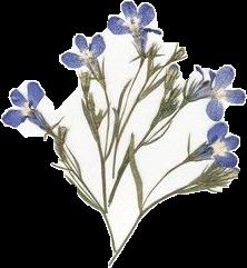 blue flowers vintage png freetoedit